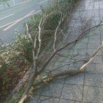 倒木に遭遇